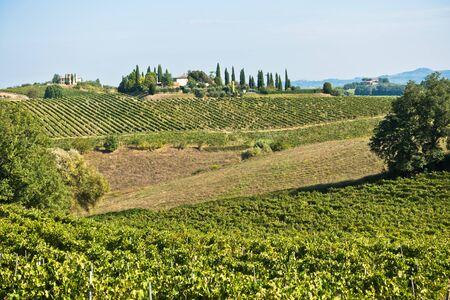 Collines de randonnée, routes secondaires et vignobles à l'automne, près de San Gimignano en Toscane, Italie