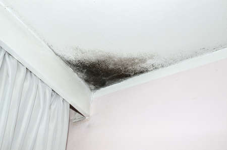 Schimmel in de hoek van het witte plafond en roze muur, met een wit gordijn aan de linkerkant. Stockfoto