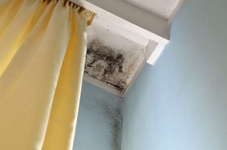 spores: Mold in the corner of the white ceiling and blue wall, with yellow curtain on the left side. Stock Photo