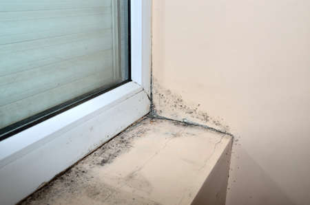 Mold beside and under new window, in the corner of the beige wall and along it. Stok Fotoğraf