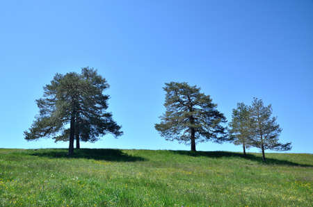 secluded: Trees on secluded colorful meadow under clear blue sky