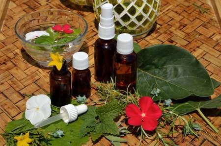 florales: Remedios de homeopat�a con plantas remedio frescas en la mesa de madera
