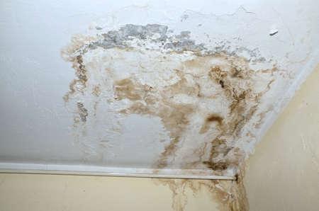 白い天井、白い熱パイプ、黄色の壁の隅にカビします。 写真素材