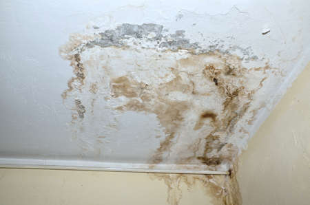 black mold: Mold in the corner of the white ceiling and yellow wall, with white heat pipe. Stock Photo