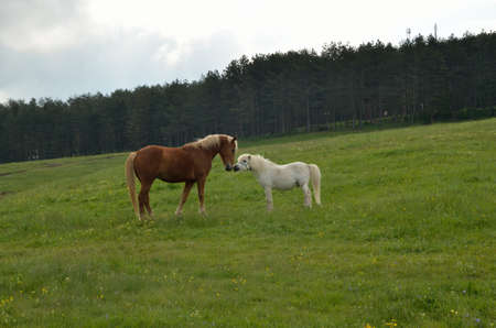 knowing: Brown and white horse knowing each other on green field