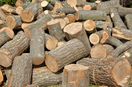 pile of logs: Pile of cut conifer logs - different sizes
