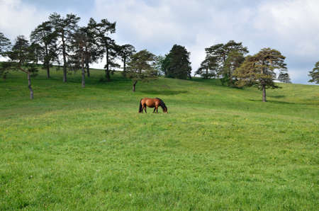 lonesome: Lonesome horse grazing on green spring field Stock Photo