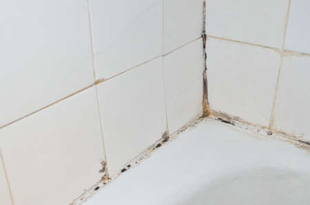 Mold and scale on old bathroom walls