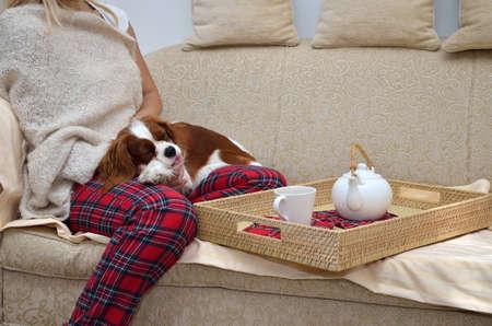 居心地のよいホームウェア キャバリア犬をソファーの上に座って、押しながらお茶を飲む女性 写真素材
