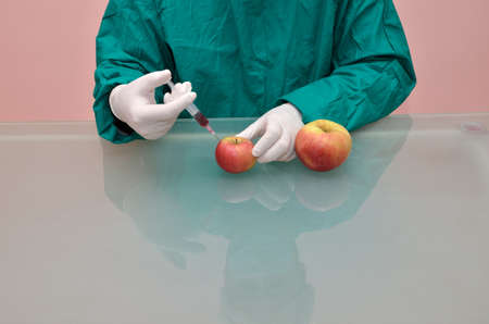 genetic food modification: Scientist holding syringe and injecting chemicals into small apple and having as a result a bigger one Stock Photo