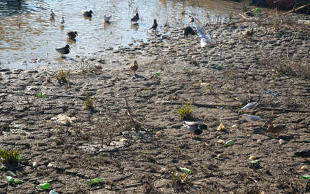 receded: The river receded, leaving behind a dry shore full of dirt and garbage. Various birds gather there for food.