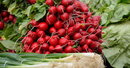 scallion: Fresh radishes and organic scallion in spring Stock Photo