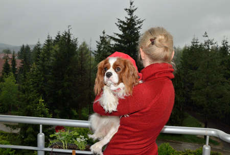turtleneck: woman in red turtleneck holding in arms lovely dog, Cavalier King Charles Spaniel (Blenheim) and watching green scenic landscape