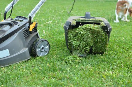 cut grass: Container of lawn mower filled up with cut grass