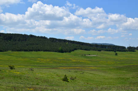 serbia landscape: Landscape of meadows and coniferous forest on Zlatibor Mountain in Serbia, on sunny spring day
