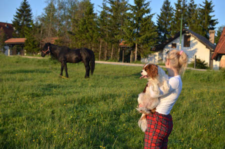 Caucasian blonde woman holding her Cavalier King Charles Spaniel Blenheim dog and watching black stallion grazing in the countryside