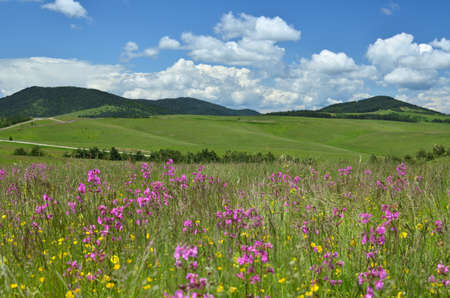 serbia landscape: Springtime landscape of Zlatibor Mountain in Serbia, with pink and yellow wildflowers in a meadow and hills in background