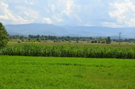 Landscape of corn field with green grass in front of it and mountain in background under cloudy sky