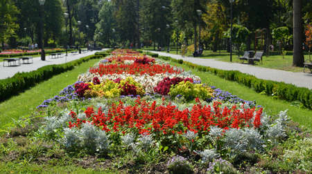 public park: Decorative flowers in a public park in Serbia in summertime
