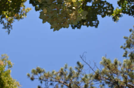 bordering: Blurred tree foliage bordering part of blue sky - background with copy space