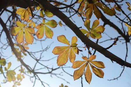 Gelb letzten Blätter auf Ästen gegen Himmel im Herbst