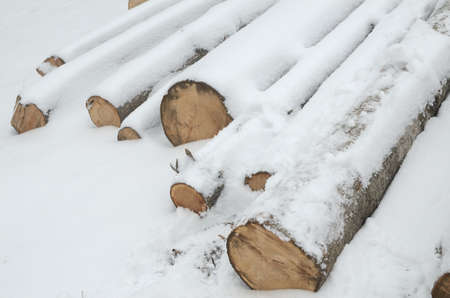 Row of logs lying on a ground covered with fresh thin snow cover Stock Photo