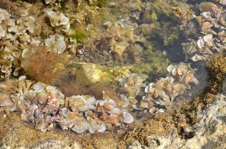 Transparent sea water with seaweeds on sea bottom 写真素材