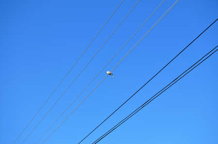 Pigeon on an electric wire against clear blue sky
