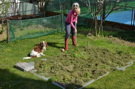 Woman raking fresh mowed grass in a garden in a company with her dog