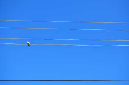 Pigeon on electric wires against clear blue sky