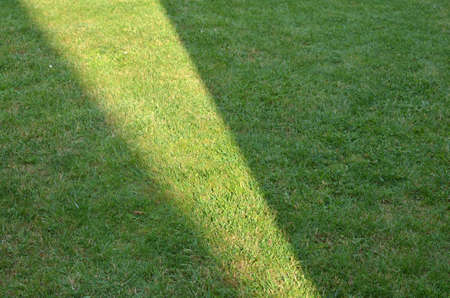 Green grass of a garden lawn with sunlight of a geometric form - suitable as a background