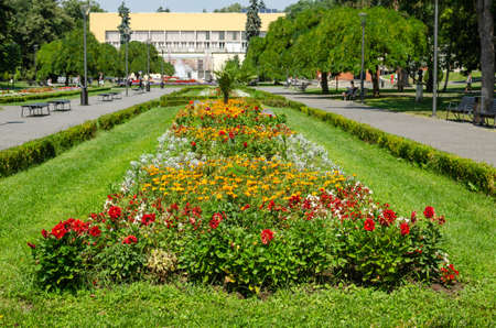 Lush flowers of a different kind in a public park - Vrnjacka Banja, Serbia 写真素材