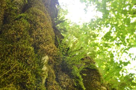 Fern in a forest under sunlight in spring Фото со стока