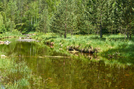 Small mountain river and its green bank