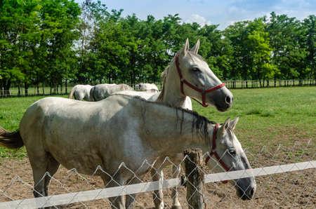 Horses standing on a farmland near a fence