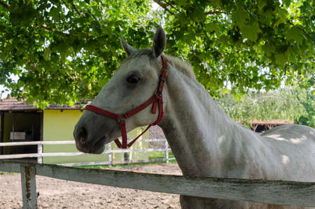 Close-up of a white horse with trees in a background