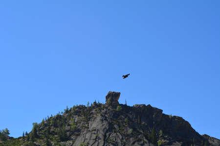 ebony: The Eagle and mountain ebony Stock Photo