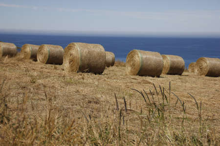 Hay bails on a New Zealand Farm photo