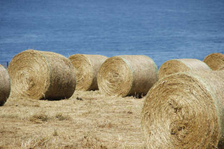 Hay bails on a Farm photo