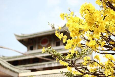 Apricot blossom in Mieu Ba Chua Su Nui Sam, Chau Doc Province, Viet Nam
