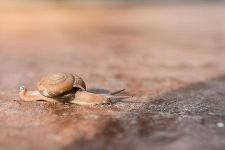 Snail crawling on the floor of stone slowly. This image is reminiscent of the rhetoric of Where Theres a Will, Theres a Way. Soft focus.