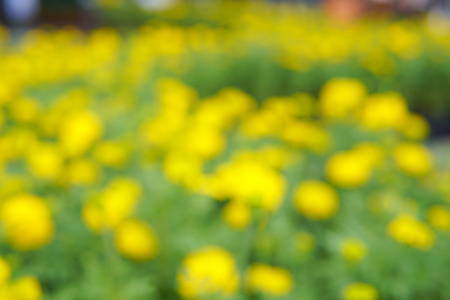 Blurred image of a field of yellow flowers. This looked spectacular and contrasting colors give a feel fresh. Stock Photo - 87982154