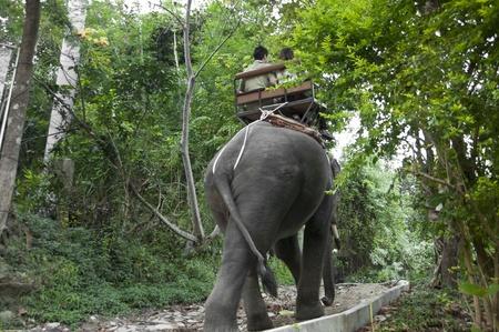 Couple riding an elephant Stock Photo