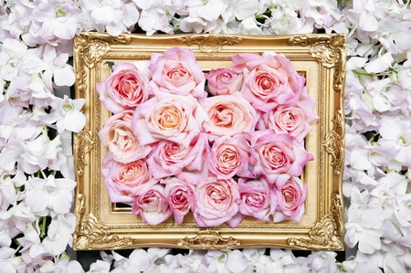 Roses in the luxury frame Stock Photo