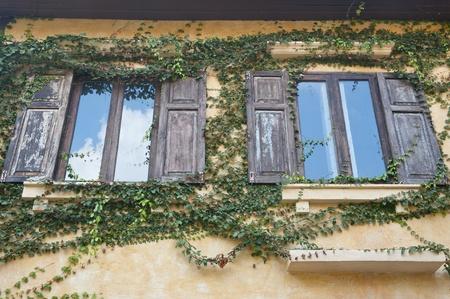 Vintage windows and ivy photo