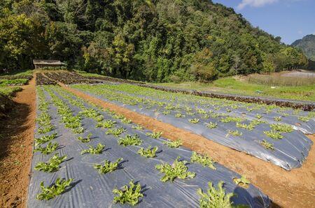 Organic Garden photo