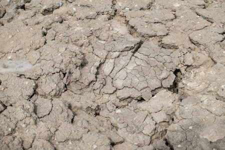 cracked earth: Dried and cracked earth background