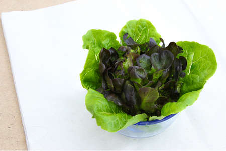 calico: Romaine Lettuce and Purple Lettuce in Glass on Calico