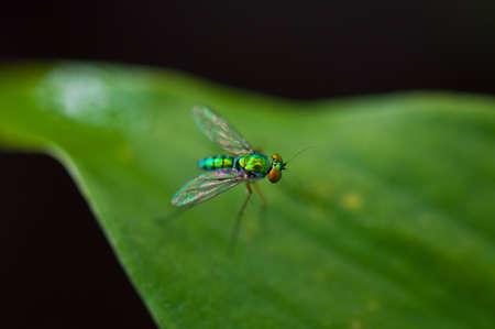bing: the bug at rayong, thailand