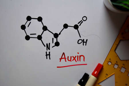 Auxin molecule write on the white board. Structural chemical formula. Education concept
